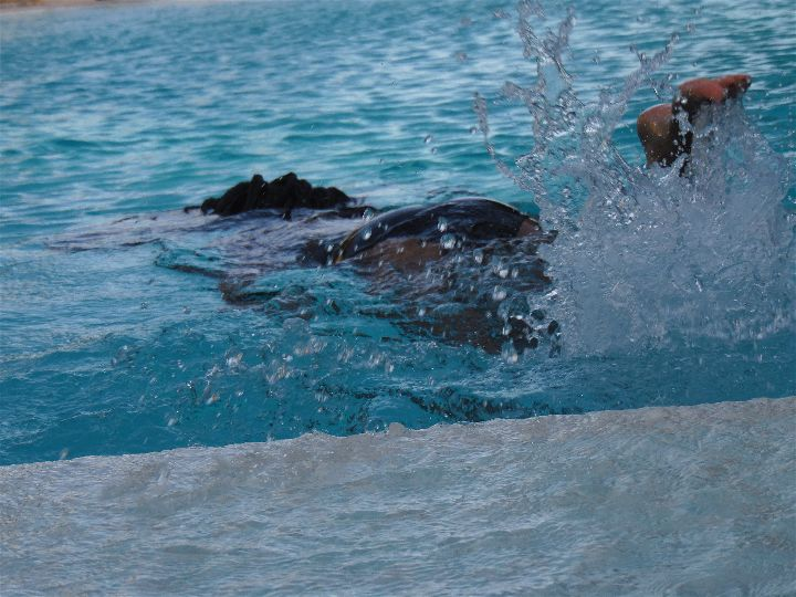 Swimming escapade 3
